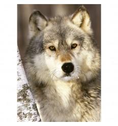 Puzzle 1000 pz lobo